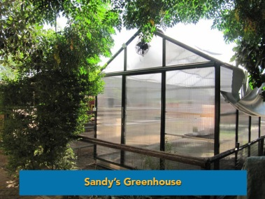 sandys-greenhouse