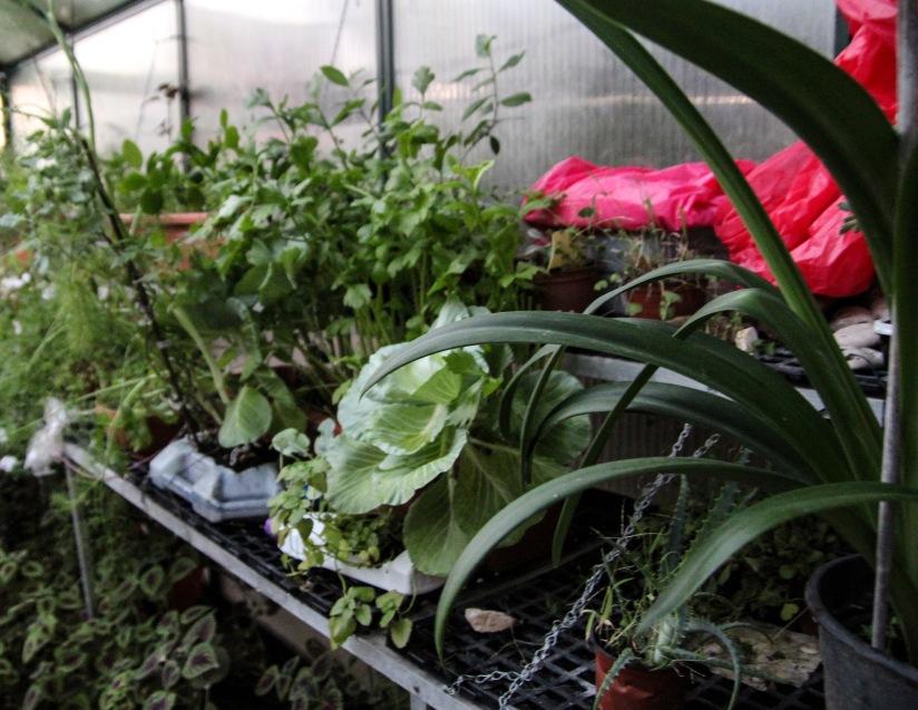Sandy's Greenhouse
