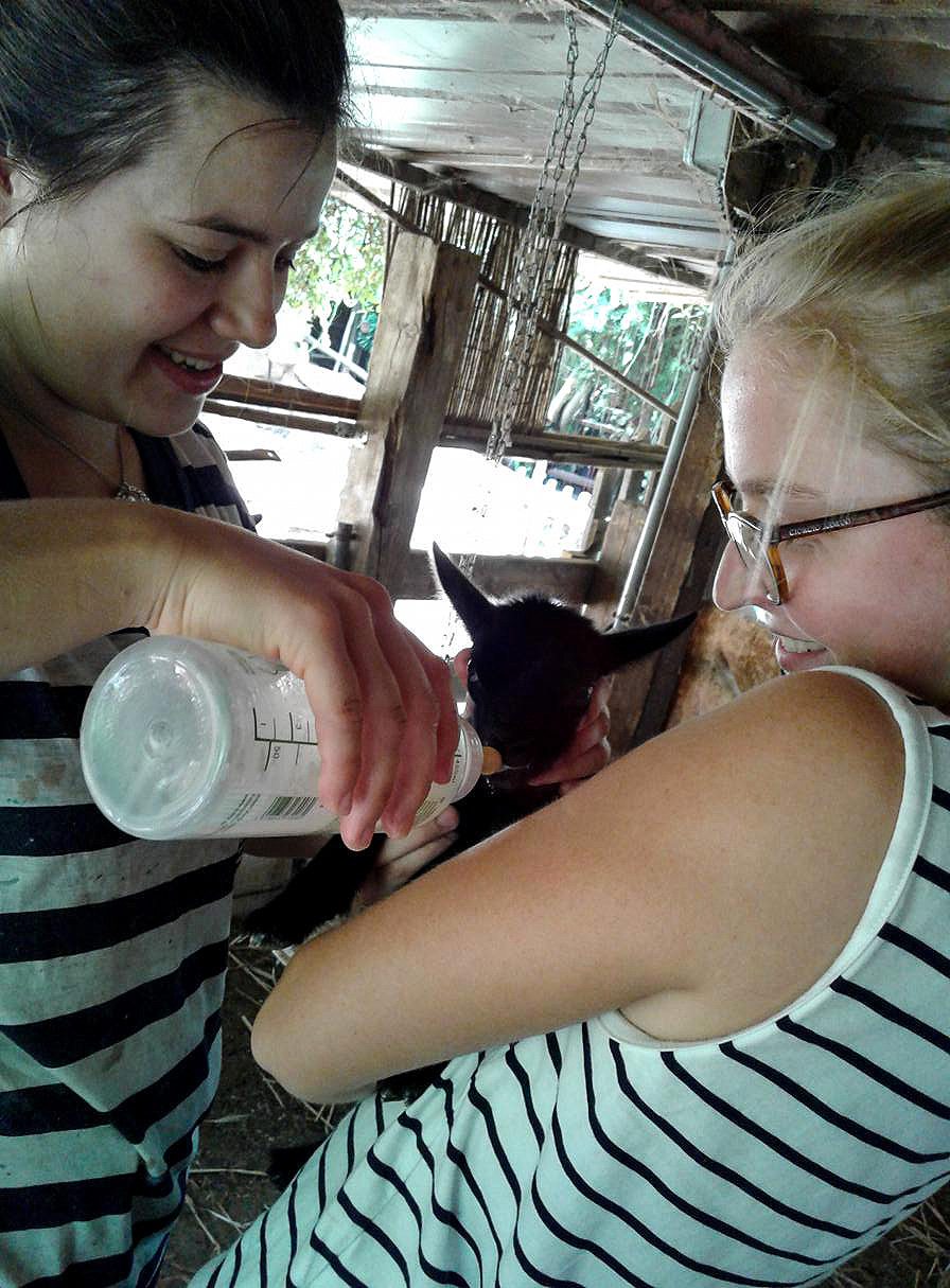 German volunteers feeding newborn goat